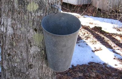 nin-maple - Maple Bucket
